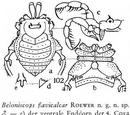 Beloniscops flavicalcar