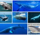 Wal, Delfin und Hai Wiki
