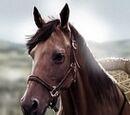 Dragon Queen's Dothraki Horse