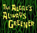 The Algae's Always Greener (gallery)