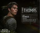Identité Thomas.png