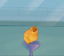 Roger (chick)