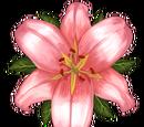 Heran lilja