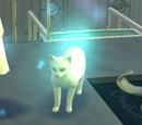 Gato espectral