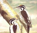 Three-toed species