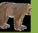 Stump-tailed Macaque (ZTABC Team)