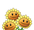 Triplet Sunflower