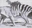 Queensland Tiger