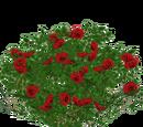 Rose (slice)