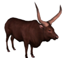 Watusi Cattle (DutchDesigns)