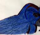 Broad-billed Parrot