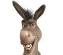 Tour/Donkey