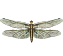 Live Food Dragonfly (HENDRIX)