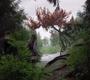 Birdbark Tree