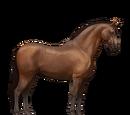 Koń lipicański
