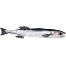 Live Food European Anchovy (Zerosvalmont)