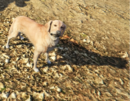Ghost Dog GTAVe Shadow.png