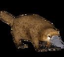 Platypus (Longisquama)