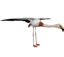 James's Flamingo (DutchDesigns)