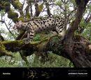 Млекопитающие олигоценовой эпохи