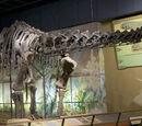 Динозавры Колорадо