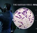 Harran Virus