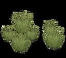 Desert Grass (Bohemian Rhapsody)