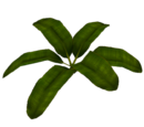 Banana Leaf (Fauna)