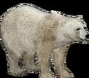 Polar Bear (Eryel & Sam)