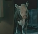 Mad Cow (Burger King)