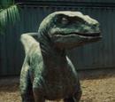 Striperaptor1.jpg.