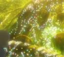 XY059: Under the Pledging Tree!
