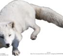 Sean The Arctic Fox