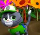 Cat Rocky/Trivia