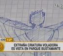 Chilean Manta-Man