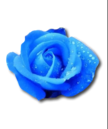 Painted Rose.png