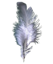 Griffin feather.png