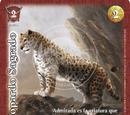 Leopardo Sagrado