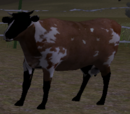 Cattle calf (2.5)