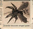 Winged Spider