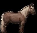 Kucyk Highland
