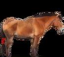 Koń Nangchen