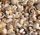 Pao Juice Virus Mushrooms