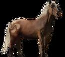 Koń Pottok