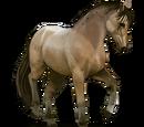 Koń Lavradeiro