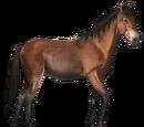 Koń z Cumberland Island