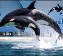 Links zu Orca´s und Delfinen in Gefangenschaft