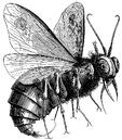 Belcebú mosca.png