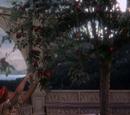 Regina's Apple Tree