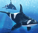 Official aquatic animals